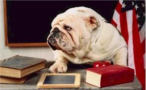 Bulldog on books